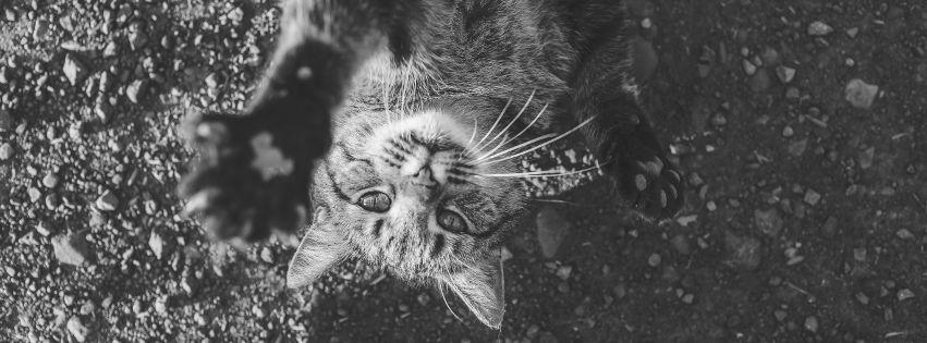 profilo facebook immagine copertina con gattino sdraiato visto dall'alto