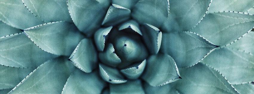profilo facebook immagine copertina con primo piano del cuore di una pianta grassa