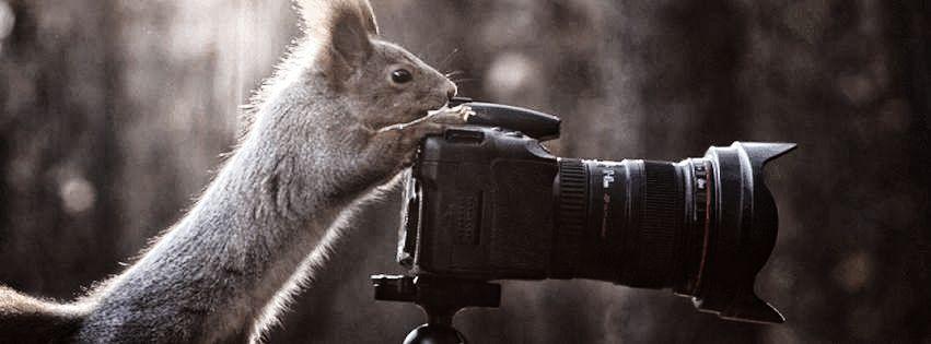 profilo facebook immagine copertina con scoiattolo che sta facendo una fotografia