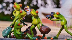 Una ranocchia di plastica ne fotografa altre quattro in diverse pose