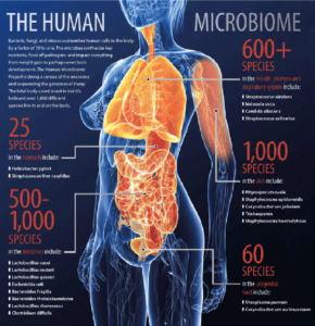 microbiota-umano