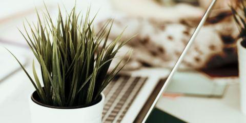 scrivania con computer e pianta
