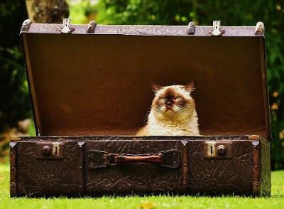 un gatto in una valigia aperta su un prato