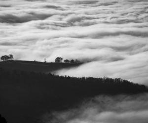 paesaggio in bianco e nero nella nebbia